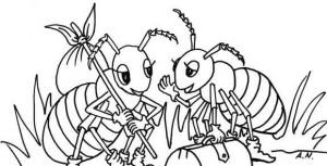owady007
